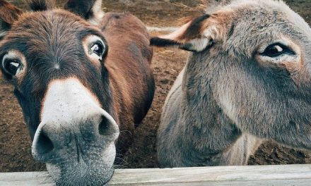 """Susan Stewart's """"DONKEY DEVOS"""" Offers Inspiring Lessons From One of God's Misunderstood Creatures"""
